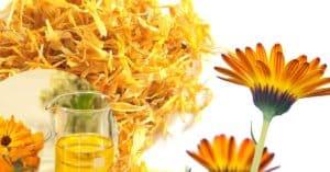 Goudsbloemolie - Calendula olie Recept om zelf maken