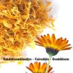 Goudsbloemblaadjes, Calendula officinalis, goudsbloem